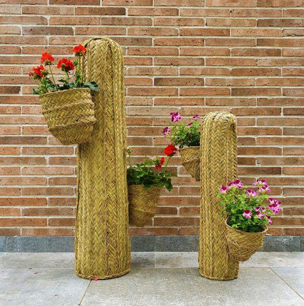 Cactus de esparto lacasaeco